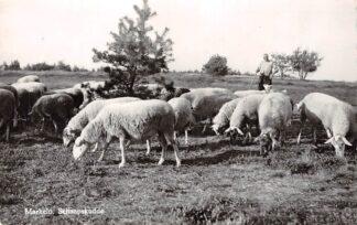 Ansichtkaart Markelo Schaapskudde Stichting de schepers en wevers van 't Oale Schaapschot, Markelo 1964 HC9310