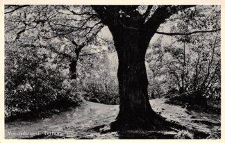Ansichtkaart Terborg Vossenheuvel 1961 HC9647