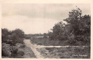 Ansichtkaart Mierlo Boschpad 1949 HC10394