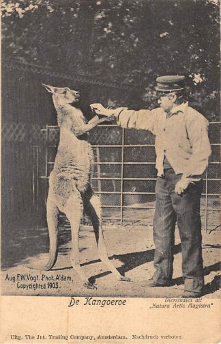 Ansichtkaart Amsterdam 1903 Artis Dierentuin De Kangoeroe met bewaker Zoo HC10997