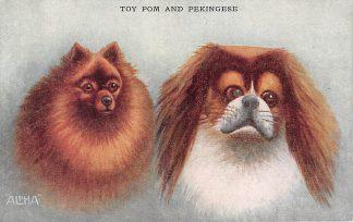 Ansichtkaart Fantasie Toy Pom ans Pekingese Honden Illustrator ALPHA HC11145