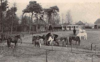 Ansichtkaart Soest Birkstraat 96 Rusthuis voor Paarden Stichting De Paardenkamp HC11155