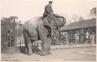 Ansichtkaart Engeland Elephant The Zoo London Fotokaart 1929 England Great-Britain Europa Dierentuin HC11323