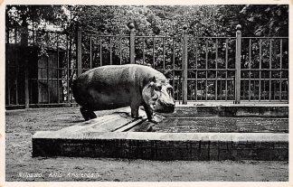 Ansichtkaart Amsterdam Artis Nijlpaard 1932 Dierentuin Zoo HC11338