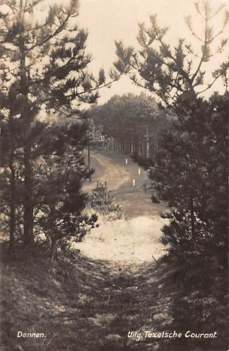 Ansichtkaart Den Burg Texel Dennen Type fotokaart 1931 HC11387