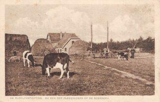 Ansichtkaart De Glind De Rudolphstichting Bij een der pleegouders op de boerderij Koeien in het weiland Barneveld Veluwe HC11460