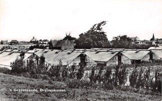 Ansichtkaart 's-Gravenzande Druivenkassen Westland HC11774