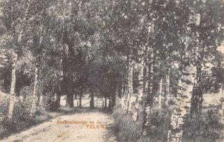 Ansichtkaart Ermelo Beukenlaantje op de Veluwe 1930 HC12024