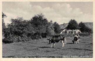 Ansichtkaart Heelsum Boerderij de Kabeljauw met koeien in de wei HC12055