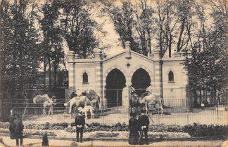 Ansichtkaart Rotterdam Diergaarde Kameelengebouw 1917 Zoo Dierentuin HC12446