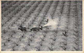 Ansichtkaart Schouwen-Duiveland Bewerking vruchtbomen na de stormramp in 1953 Ouwerkerk Bruinisse HC13336