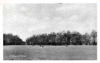 Ansichtkaart Stroe Groeten uit 1962 Weiland met koeien Barneveld Veluwe HC13668