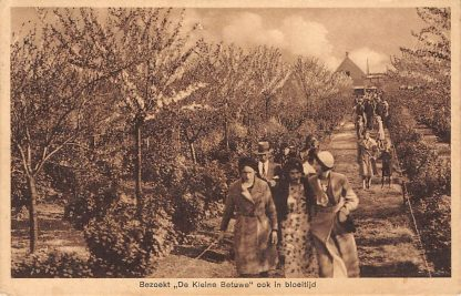 Ansichtkaart Haastrecht Bezoekt De Kleine Betuwe ook in bloeitijd Krimpenerwaard HC13814