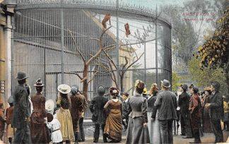 Ansichtkaart Amsterdam Artis Apenkooi 1906 Zoo Dierentuin HC13953