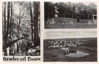 Ansichtkaart Baarn Groeten uit 1950 Hertenkamp Bos en Schaapskudde HC13972