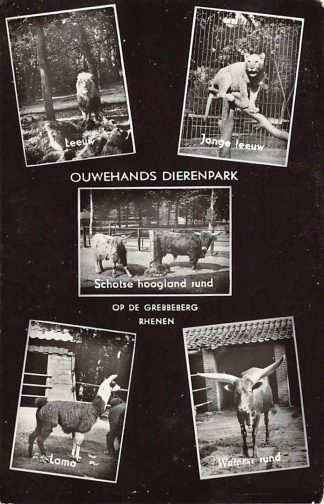 Ansichtkaart Rhenen Ouwehands Dierenpark Op de Grbbeberg Leeuw Jonge Leeuw Schotse Hoogland rund Lama Watoest rund Zoo Dierentuin HC15129