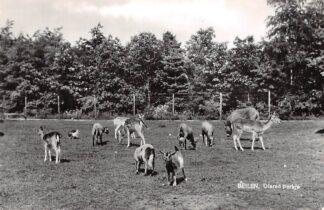 Ansichtkaart Beilen Dieren parkje 1968 HC15455