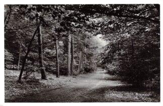 Ansichtkaart Hengelo (GD) Bosgezicht 1963 HC15890