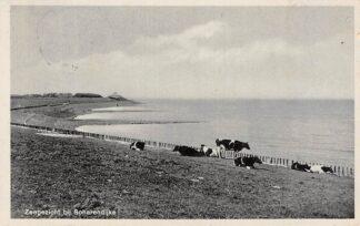 Ansichtkaart Scharendijke Zee gezicht met koeien in de wei 1940 HC15938