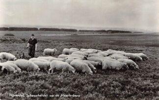 Ansichtkaart Nijverdal Schaapherder op de Haarlerberg met schaapskudde 1958 HC15993