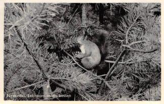 Ansichtkaart Nijverdal Eekhoorn in de bossen HC15995
