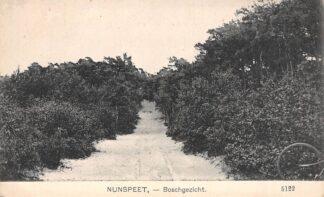 Ansichtkaart Nunspeet Boschgezicht Veluwe HC16016