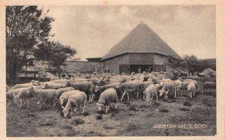 Ansichtkaart Laren (NH) Groeten uit 't Gooi Kudde schappen HC16182