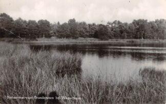 Ansichtkaart Wapserveen Natuurreservaat Branderveen HC16777