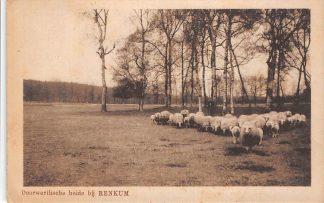 Ansichtkaart Renkum Doorwerthseheide met schaapskudde Doorwerth 1923 HC17212