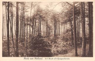 Ansichtkaart Hoek van Holland In 't Bosch n/h Kampeerterrein HC17375