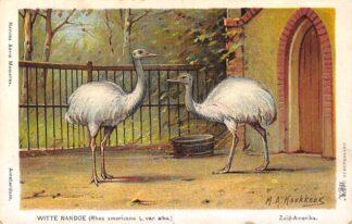 Ansichtkaart Amsterdam Artis Witte Nandoe Rhea americana L. var. Alba. Illustrator M.A. Koekkoek Dierentuin Zoo HC17553