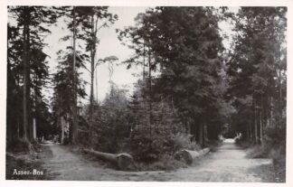 Ansichtkaart Assen Asser Bos 1949 HC17663
