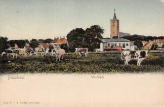 Ansichtkaart Dirksland Westzijde Koeien in de wei 1906 Goeree-Overflakkee HC17691