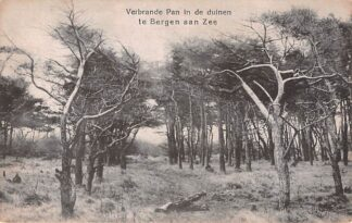 Ansichtkaart Bergen (NH) Verbrande Pan in de duinen te Bergen aan Zee HC18290