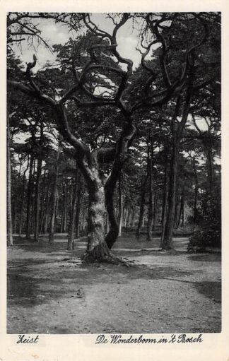 Ansichtkaart Zeist De Wonderboom in 't Bosch 1936 HC18631