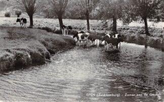 Ansichtkaart Epen Zuid-Limburg Zomer aan de Geul Koeien in de rivier 1972 HC18727