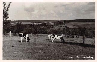 Ansichtkaart Epen Zuid-Limburgs Landschap met koeien HC18729
