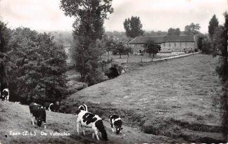 Ansichtkaart Epen De volmolen met koeien  Molen 1968 HC18730
