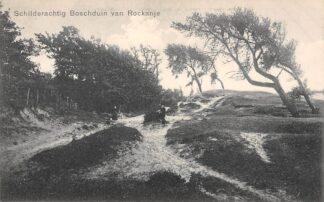 Ansichtkaart Rockanje Schilderachtig Boschduin HC18741