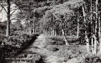 Ansichtkaart Holten Diepe Hel Holterberg 1963 HC18970