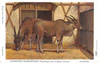 Ansichtkaart Amsterdam Artis Livinstone's Eland-antiloop Taurotragus oryx livingstoni Sclater Illustrator H. Koekkoek Zoo Dierentuin HC19535