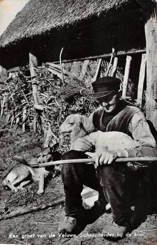 Ansichtkaart Ermelo Een groet van de Veluwe Schaapherder bij de kooi met schaap en herdershond 1964 HC20226