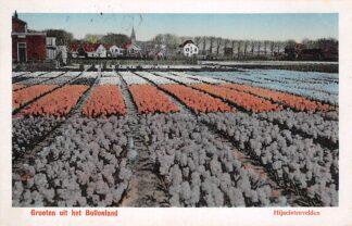 Ansichtkaart Hillegom Groeten uit het Bollenland Hijacintenvelden Bloembollenvelden 1923 HC20352