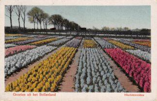 Ansichtkaart Hillegom Groeten uit het Bollenland Hiacintenvelden Bloembollenvelden 1923 HC20353