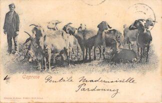 Ansichtkaart Italië Capraie Herder met kudde geiten 1901 Italia Europa HC21072