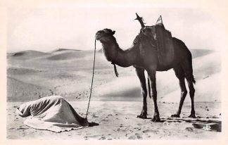 Ansichtkaart Algerije Alger La Prière au Desert Scenes et Types Dromedaris Frankrijk France Afrika HC21247