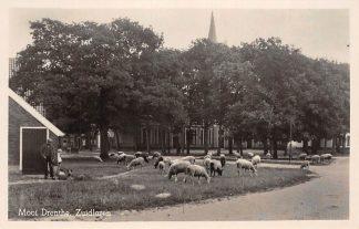 Ansichtkaart Zuidlaren Schaapskudde Mooi Drenthe HC21813