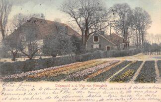 Ansichtkaart Heemstede Tulpenveld a.d. Weg naar Heemstede 1904 Boerderij Bloembollenvelden Haarlem HC22073