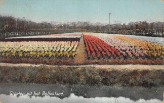 Ansichtkaart Lisse Hillegom Sassenheim Groeten uit het Bollenland Bloembollenvelden HC22805