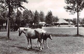 Ansichtkaart Biddinghuizen Flevohof Kinderboerderij Paard 1971 HC23758